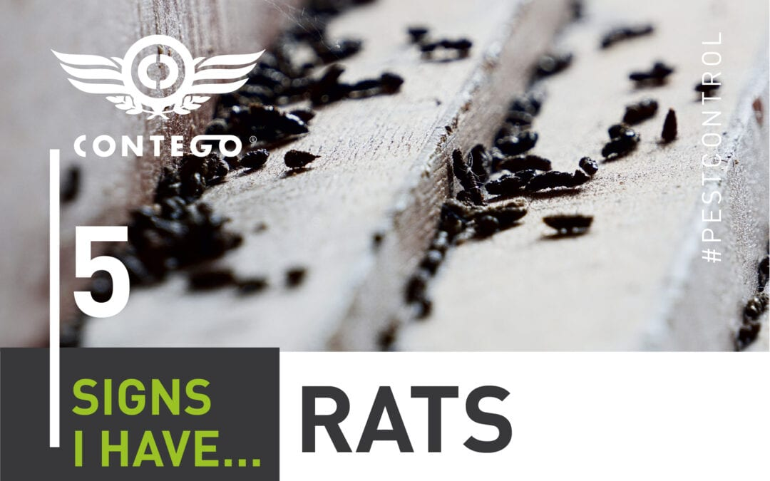 5 SIGNS I HAVE RATS IN MY HOME