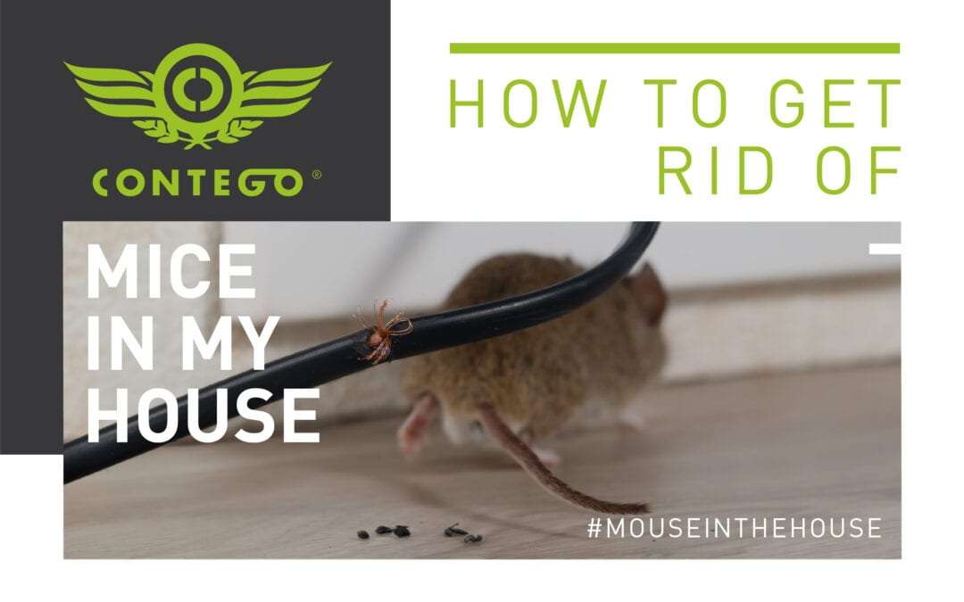 How Do I Get Rid Of Mice In My House?