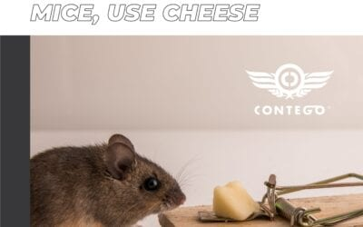 Urban Myth: If You Want to Trap Mice, Use Cheese