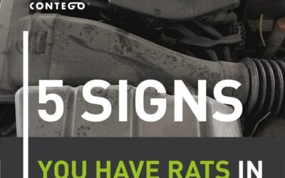 5 Signs You Have Rats on Your Premises